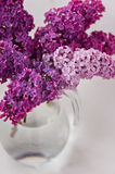 Fresh lilac flowers in glass vase close up isolated on white background Stock Image
