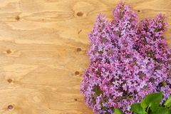 Fresh lilac flowers on the old painted wooden surface. Royalty Free Stock Photo