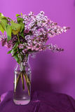 Fresh lilac flowers in a simple glass vase Royalty Free Stock Photo
