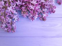Fresh lilac on a violet wooden background, frame fragrant. Fresh lilac on a violet wooden background, fragrant Stock Image