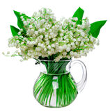 Fresh lilies of the valley in a glass jar isolated on white back. Beautiful fresh lilies of the valley in a glass jar isolated on white background Stock Image