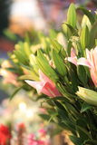 Fresh lily flowers Royalty Free Stock Photography