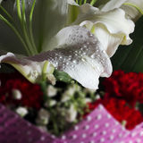 Fresh lily petals and drops. Bouquet of flowers,Fresh lily petals and drops Stock Images