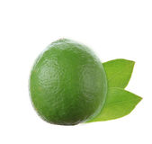 Fresh Lime Royalty Free Stock Image