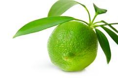 Fresh lime. On white background stock image
