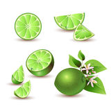 Fresh lime with flowers Royalty Free Stock Photo