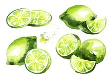 Fresh lime fruit compositions set. Watercolor hand drawn illustration. royalty free illustration