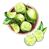 Fresh Lime fruit in the platter top view composition. Watercolor hand drawn illustration. stock illustration
