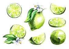 Fresh lime fruit set. Watercolor hand drawn illustration royalty free illustration