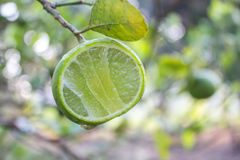 Fresh lime with green leaf Stock Photo