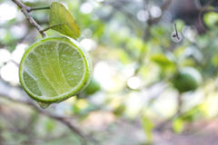 Fresh lime with green leaf Royalty Free Stock Photo