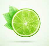 Fresh lime with leaves royalty free illustration