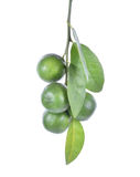 Fresh lime with leaves isolated on white background Royalty Free Stock Images