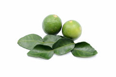 Fresh lime leaves. Fresh limes isolated on a white background royalty free stock images