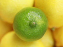 Fresh lime and lemons Royalty Free Stock Image