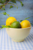 Fresh lime and lemons in the bowl Stock Images