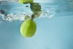 Fresh lime in water isolated on a blue background. Ripe lime with green leaves in water isolated on a blue background, waves on the surface of water. The concept stock images