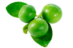 Fresh limes. And leaves Isolated on white Royalty Free Stock Photography