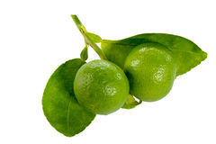 Fresh limes. And leaves Isolated on white Stock Image