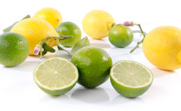 Fresh limes and lemons Stock Images