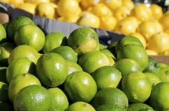 Limes. Fresh limes for sale in the outdoor fruit market Royalty Free Stock Photography