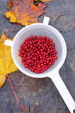 Fresh lingonberries Royalty Free Stock Photography
