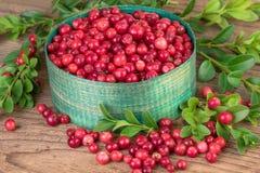 Fresh Lingonberries Stock Photography