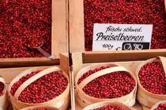Fresh lingonberry from market Royalty Free Stock Photos