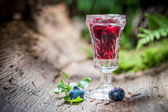 Fresh liqueur made of blueberries and alcohol in forest Stock Images
