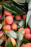 Fresh Litchi Stock Images