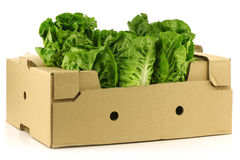 Fresh little gem lettuce in a cardboard box Stock Photos