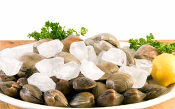 Fresh littleneck clams Royalty Free Stock Image