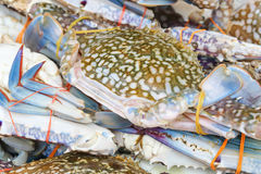 Fresh live blue crab. At weekend fishers market Stock Photo