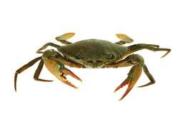 Free Fresh Live Crab Isolated On White Background Stock Photo - 96901850