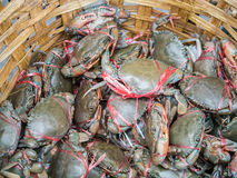Fresh living crabs Royalty Free Stock Photo