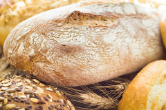 Fresh loaf bread rolls Stock Image