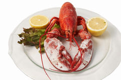 FRESH LOBSTER . Stock Photo