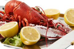FRESH LOBSTER . Royalty Free Stock Photography