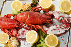 FRESH LOBSTER . Royalty Free Stock Images