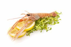 Fresh lobster Stock Photography
