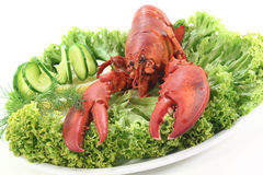 Fresh lobster Stock Images