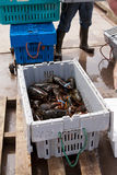 Fresh Lobster Royalty Free Stock Photos