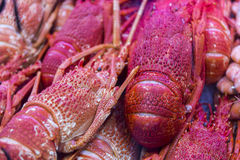 Fresh lobster closeup stock image