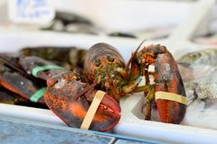 Fresh Lobster at fish market Stock Photography
