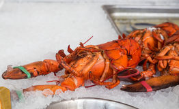 Fresh Lobster on Ice Royalty Free Stock Photos