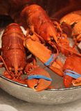 Fresh lobster on ice at a market on the fishmonger Royalty Free Stock Photo