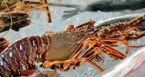 Fresh lobster on ice Stock Photo