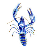 Fresh lobster illustration. Hand drawn watercolor on white background. Stock Image