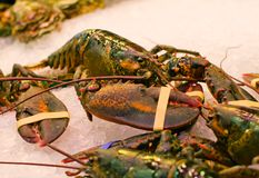 Fresh  lobster Royalty Free Stock Photo