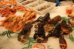 Fresh lobster. At the market, seafood Boqueria Market in Barcelona royalty free stock image